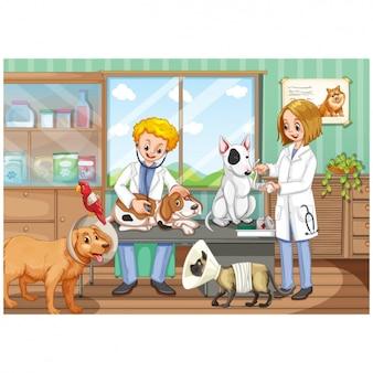 Fondo de consulta de veterinario