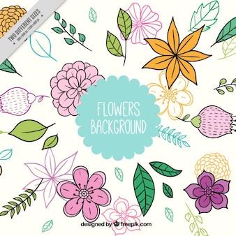 Fondo de diferentes flores dibujadas a mano