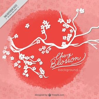 Fondo de flor de cerezo con círculo rojo