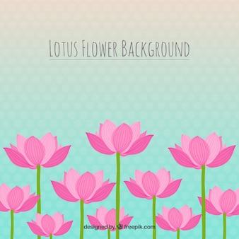 Fondo de flor de loto