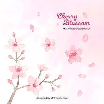 Fondo de flores de cerezo de acuarela