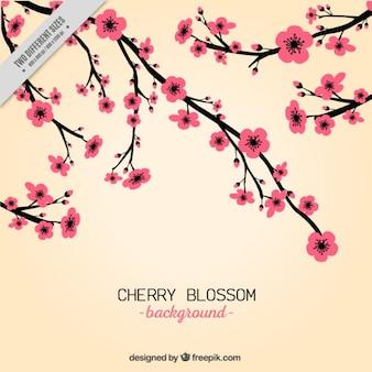 Fondo de flores rosas de cerezo dibujadas a mano