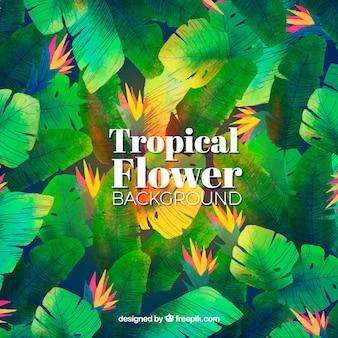 Fondo de flores tropicales en acuarela