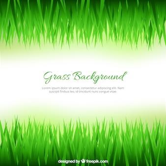 Fondo de hierba