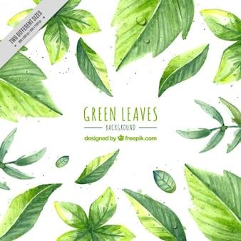 Fondo de hojas verdes pintadas a mano