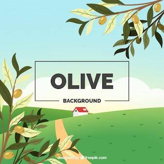 Fondo de naturaleza con ramas de olivo y hierba verde