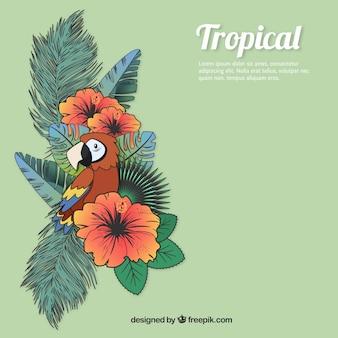 Fondo de naturaleza Tropical