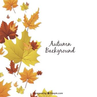 Fondo de otoño con flores secas decorativas