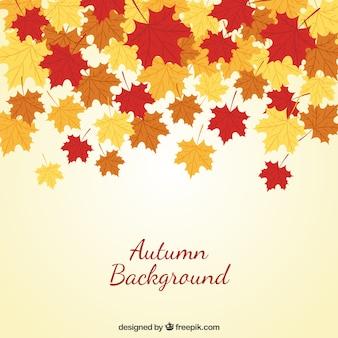 Fondo de otoño con las hojas