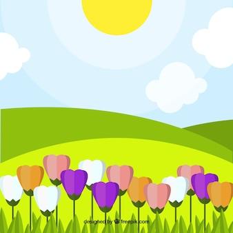 Fondo de paisaje con tulipanes de colores