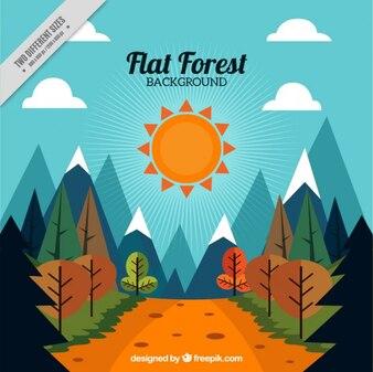 Fondo de paisaje soleado con un camino entre el bosque