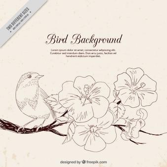 Fondo de pájaro con rama en flor