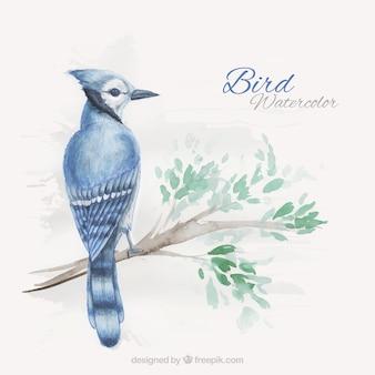 Fondo de pájaro exótico pintado a mano en una rama