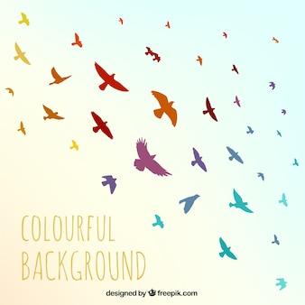 Fondo de pájaros coloridos
