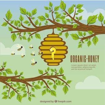 Fondo de panal de abejas con miel