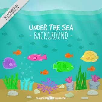 Fondo de peces exóticos y algas bajo el mar