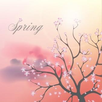 Fondo de primavera, árbol con flores