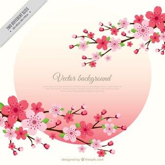 Fondo de ramas de flores de cerezo