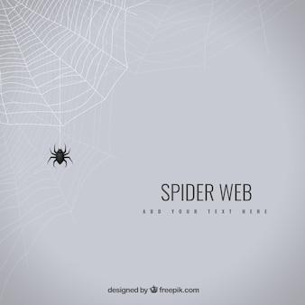 Fondo de tela de araña