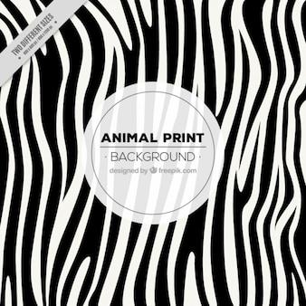 Fondo de zebra