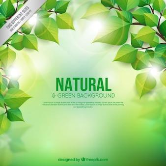 Fondo natural y verde