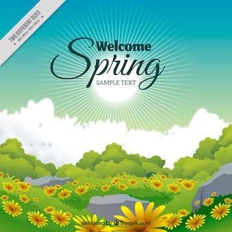 Fondo primavera de paisaje con margaritas