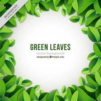 Fondo redondo de hojas verdes
