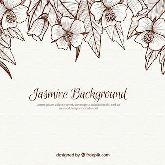 Fondo vintage de bocetos de jazmines y hojas