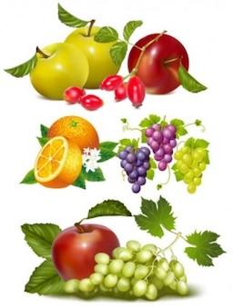 Frutas coloridas vector