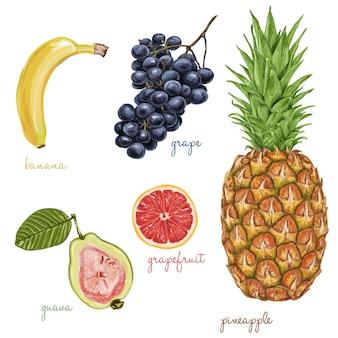 Frutas pintadas con acuarelas