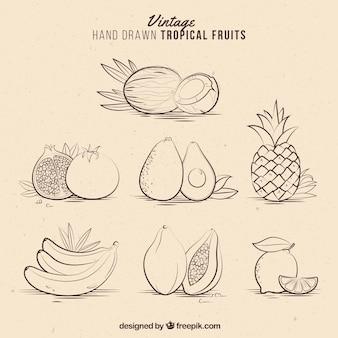 Frutas tropicales vintages dibujadas a mano