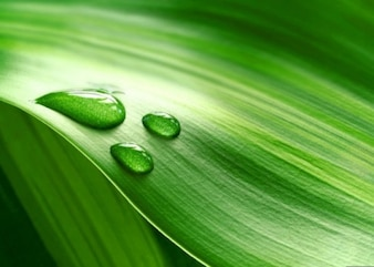 gotas de agua sobre la hoja verde fresca