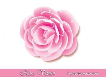 Hermosa Rosa Rosa