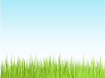 Hierba contra el cielo azul