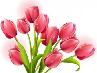 hoja verde verde-rojo - flores de la primavera