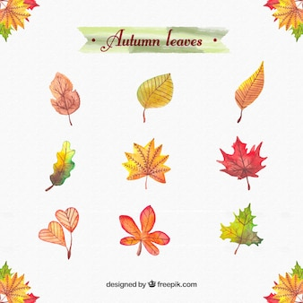 Hojas de acuarela de otoño