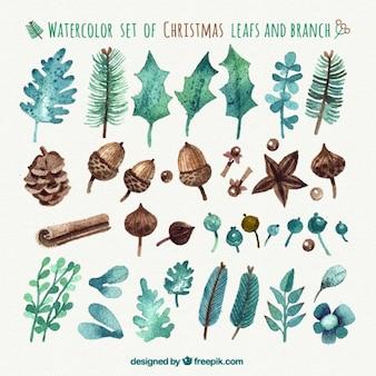 Hojas de la acuarela de Navidad y ramas