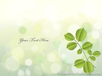 Hojas verdes sobre fondo claro