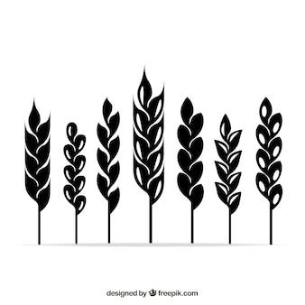 Iconos de espigas de trigo