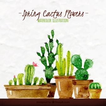 Ilustración en acuarela de cactus primaverales