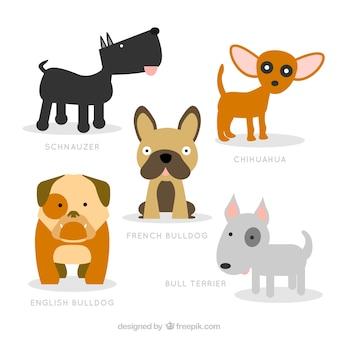 ilustración de razas de perros lindos