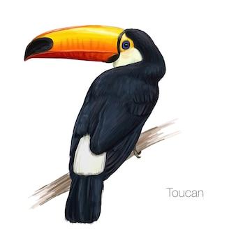 Ilustración de un toucán dibujado a mano