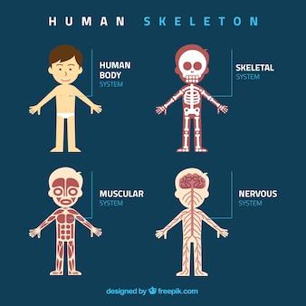 Ilustración plana de rayos X humana