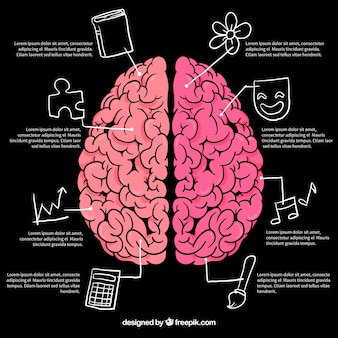 Infografía de cerebro con dibujos