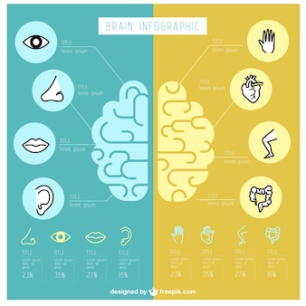 Infografía de cerebro humano fantástica