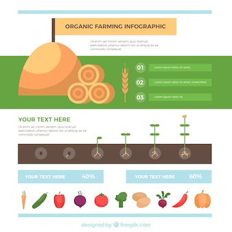 Infografía orgánica plana en tonos suaves