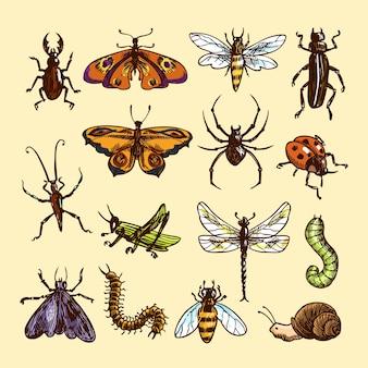 Insectos croquis coloreado decorativo iconos conjunto con mariquita oruga veleta aislado ilustración vectorial