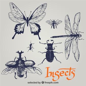 Insectos esbozados