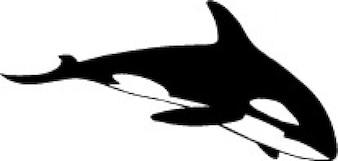 Lado de la ballena