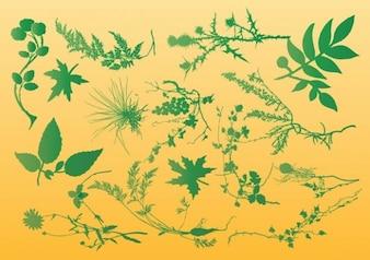 las plantas de los gráficos vectoriales